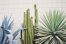 Landscape & Greenery / by Caitlin Perry {setsquare studio}