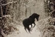 winter wonderland / by ~Cowgirl Lisa~