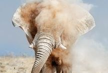 elephants. / because i love them in a way that doesn't even make sense to me. / by tiffany rose