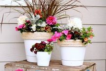 Δ Gardening Glory Δ