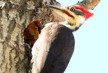 Wildlife in and around Gordon's Park / Wildlife found on Manitoulin Island and Gordon's Park