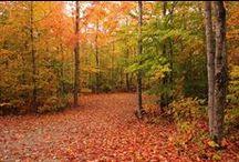 Fall at Gordon's Park