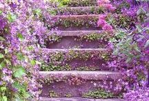 My Little Garden / by Pamela Sliger-Richards
