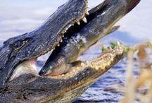 Florida, subtropical flora and wildlife / flora and wildlife of Florida / by Arnaud Levendangeur (Lekowalski)