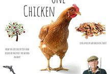 cluck / Keeping chickens, chooks, chicken how to, chickens as pets, chicken care, chicken eggs, chicken farm, chicken help