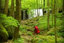 A Hiking We Will Go / Hiking, Backpacking, Camping, Nature, Outdoors, Hiking with Kids, Hiking with Special Needs, Outdoor Gear, Hiking Gear, Hiking Destinations, Photos