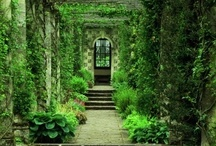 Secret Garden / One of the most delightful things about a garden is the anticipation it provides.  ~W.E. Johns, The Passing Show  / by Jennifer Henderson