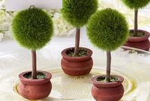 Topiaries / Confidence is a plant of slow growth in an aged heart.     -- William Pitt   / by Jennifer Henderson