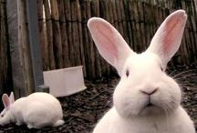 Bunnykins / The dog and the rabbit are telling us not to chase unattainable material goals. -- Kit Williams  Cute bunnies / by Jennifer Henderson