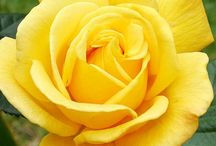 Warm Sunny & Bright / The warmest, brightest, cheerful & sometimes yummy color around is yellow :) / by M H