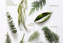 Gardening + Landscaping