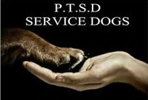 Service Dogs and ESA Cats / All about cute dogs and cats who help those with PTSD and other psychiatric illnesses.