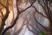 Fog ...Mist