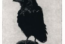 As the Crow Flies / I love crows and ravens. Their social structures are fascinating and they are so intelligent.