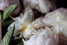 Flora / by Sarah Grazier