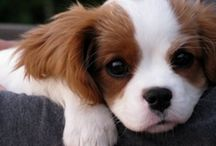 Puppies! / by Sarah Crampton