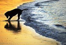 Ocean Calling. / by Kate Reeve