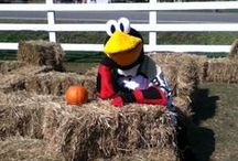 Tux on the town / Tux spends a lot of time making new friends around Northeast PA.  Here's where you can see where he's been!