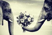 Animals / by Lindsay Hogan
