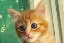 A-Critters-Cats / by Charlene Fulghum