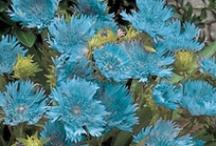B-Aqua/Turquoise  / by Charlene Fulghum