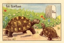 Turtles / by Laurie Zeiden