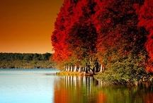 Autumn Colors / by Susan Johanson