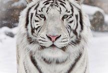 Animal Kingdom / by Sharon Huser