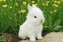 A-Critters-Rabbits / by Charlene Fulghum