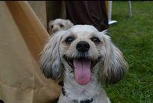 Dogs a WOMAN'S best friend / by TheNeckWorkExpert YvonneLarson