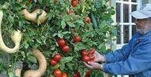 gardening like a pro