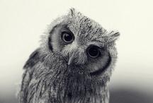* OWLS *
