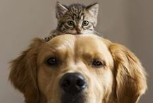{Glam} Pets / #pets #dogs #cats #animals