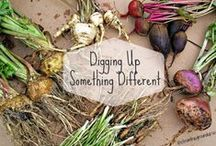 Sustainable Farming / Cool Ideas and Helpful Information for our farm/homestead. Goats, Sheep, Pigs, Rabbits, Chickens, Gardening, etc / by Katie King
