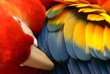 Birds / by Terry Schartz
