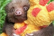 Sloth Love / Beautiful ♡ / by Victoria