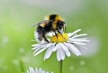 BEES, HIVES, & HONEY / by PAULA CRUZ