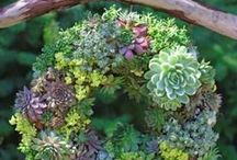Gorgeous Gardens / by Cindy Eikenberg (Little Miss Celebration)