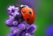Lucky Little Ladybugs