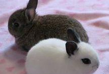 Bunny!!!!!!!!!! / by Snow Rivera