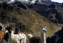 Bolivien - Bolivia   PLACES