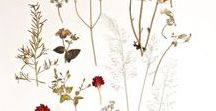 Pressed Plants / Photos of pressed plants. Beautiful flower arrangements.