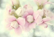 Blooms / by jamblinne