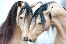 Horses / To know them is to Love them!! / by Kimmie Kat