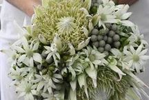 White Wedding Bouquets / Monochromatic, white on white bridal bouquets are simply timeless elegance, and will always be in style.  Here's a gorgeous collection of bridal bouquets and few of my own.