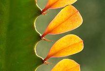 Succulents / by Amanda Pacetta