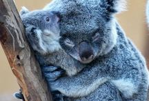 snuggly little critters. / by Lacey Parsons