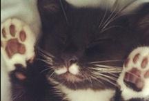 Cat obsession. / by Jessa Miska