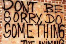 go vegan / by Diana Parsons