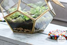 Terrariums / by Andrea Bonelli